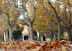 Parque Grande Zaragoza en otoño (joseange) Tags: bokeh park autumn zaragoza meyeroptik trioplan samsung nx trees