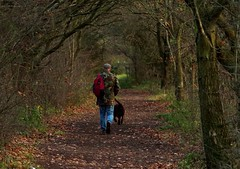 autumn man and dog walking in woodland (1) (Simon Dell Photography) Tags: simon dell photography sheffield shirebrook s12 valley hackenthorpe old new pictures autumn winter colors one man his dog walking woodland