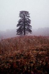 Untitled (reinfected) Tags: landscape tree field fog mist upstate ny new york up state outside wood woods forest winter