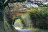 Camino a Llagú (ccc.39) Tags: asturias camino llagú otoño greaterphotographers