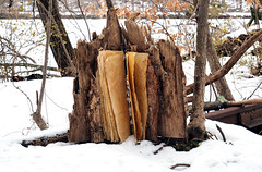 trees-snow (bgmills) Tags: environmentalart landart bookart outdoorinstallation artonthetrail artinnature natureinart