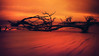 THE SHIP MUSEUM (Suzanna Mars) Tags: driftwood boneyard hunting island beach trees winter
