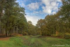 Waterwin gebied (Marjon van der Vegt) Tags: clingsebossen natuur herfst kleuren paddenstoelen wolken ds kever bladeren