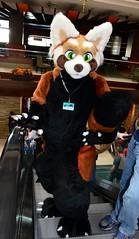 Midwest Furfest 2017 530 (finbarzapek / SeanC) Tags: midwest furfest mff mwff 2017 furfest2017 furry con convention fursuits fursuit fursuiter animal costumes furries