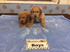Roxie Boys 12-10
