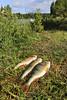 Fiskelycka (Anders Sellin) Tags: skärgård sverige sweden vatten archiepelago baltic sea sommar sommarlov stockholm summer vattenlek vattensport östersjön