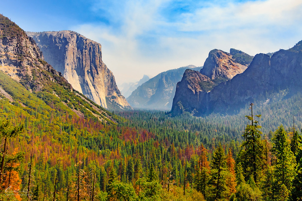 The World S Best Photos Of California And Pine Flickr