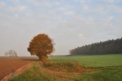 Herbstfelder (Uli He - Fotofee) Tags: ulrike ulrikehe uli ulihe ulrikehergert hergert burghaun nikon nikond90 fotofee plätzer meinweg nebel november morgensonne sonne sonnenlicht warmeslicht sonnenschein bäume feld felder licht schatten