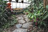 Tropical Dreams (Cindy's Here) Tags: conservatory thunderbay ontario canada steppingstones ansh scavenger4