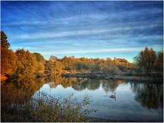 Swimming alone (andystones64) Tags: cygnet swan silicapond reserve water openwater trees bushes sky cloud nature naturephotography weather daylight image imageof imagecapture lincolnshire nlincs northlincs scunthorpe scenic scenery outdoors view