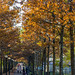 Allee In Autumn Park