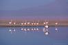 Follow me ! (PHOTOGRAFIEBER) Tags: southamerica südamerika backpacking bolivia peru chile adventure piedrasrojastrip laguna chaxa piedras rojas red rocks flamingos valle de la luna san pedro atacama desert salar salt dunes
