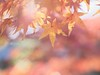 Non-title (sakemoge) Tags: 四天王寺 本坊庭園 紅葉 autumn leave tree osaka panasonic g8 45mmf18 zuiko