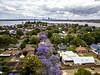Applecross, WA (Marie Ooi) Tags: jacaranda spring perth perthcity trees purple westernaustralia applcross drone canon 5dmiii marieooi