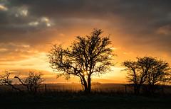Barbury Sunset (In=Sight) Tags: barbury barburycastle sunset wiltshire silhouette