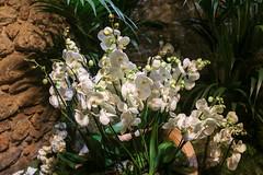 Temps de flors_0143 (Joanbrebo) Tags: girona catalunya españa es tempsdeflors tempsdeflors2017 canoneos80d eosd efs1018mmf4556isstm autofocus flors flores flowers fleur fiori blumen blossom