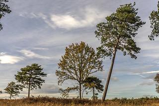 Sunningdale Heathland