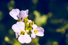 20170330-unbenannt-03478 (stefanschwarzmann) Tags: flower flowers flowersandmacro macrosecrets macro macrophotography macroperfection macrobrilliance macros nature outdoor summer instagood instalove sonya7 sonyalpha