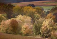 Autumn Splendor (TuthFaree) Tags: autumn fall color painting mthope ohio hss slidersunday field corn harvest rural farm
