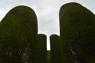 Top of the Yews