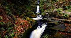 Autumn, Pistyll Rhaeadr (Peter.S.Roberts) Tags: interestingness interesting pistyllrhaeadr powys wales autumn outdoor waterfall river llanrhaeadrymmochnant water afondisgynfa siteofspecialscientificinterest silurian nature woods forest landscape longexposure greenery foliage vegetation leaves undergrowth flora moss herbage verdure frondescence autumnleaves fall fallenleaves rocks stones fallcolors ferns twigs slate algae mosses grasses 52°51′1797″n3°22′4274″w autumncolours natural brownleaves daylight afternoon runningwater fast high unspoiled november takenonnovember82017 essence soul spirit ethos life substance flowing flowingwater lifeforce perspective dof pov flickr motion pathway walkway beauty beautiful historic passage cymru petersroberts