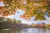 Maple view - Nikon D3s & Nikon AF-S Nikkor 24mm f/1.4G ED (TORO*) Tags: nikon d3s af afs nikkor 24 24mm f14g f14 14 ed osaka castle park kaede momiji maple tree bokeh blur japan branch depth field red green orange gradation sky