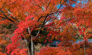 東福寺 京都