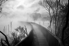 Hot Ways (Thibaud Chanfray) Tags: hotpools rotorua newzealand nouvellezelande mudpools pools thermal geothermal volcano volcanic blackandwhite way bridge fog