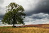 The Tree (maureen bracewell) Tags: yorkshire landscape tree grasses heather grousebutts nature walking hawnby northyorksmoors moorland england uk clouds stormy maureenbracewell cannon bilsdale fantasticnature