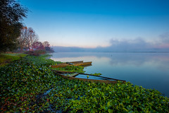 Tranquility... (Artur Tomaz Photography) Tags: jacintos lake landscape pateiradefermentelos sky tranquility blue boat flowers fog lagoon nature orange portugal sunrise tree water