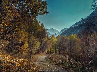 our autumn journey