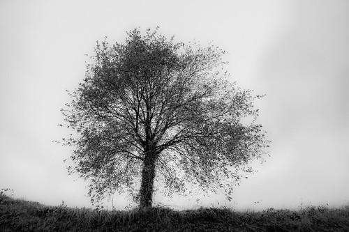 dream tree - droomboom