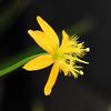 2017-11-29 Bulbine aloides - BG Teplice (beranekp) Tags: czech teplice teplitz botany botanik botanic herbář herbary herbarium garden garten flora flower plant bulbine