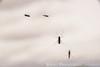Islande_20170529_4567 (Hatuey Photographies) Tags: hatueyphotographies islande islande2017 travelphotography voyage iceland icelandtravel myvatn mouche fly