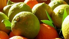 Citrons et mandarines (bernard.bonifassi) Tags: bb088 06 alpesmaritimes 2017 novembre nice counteadenissa agrume citron mandarine macro canonsx60 eu