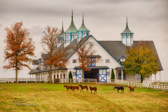 Legends in their youth... (Howard Brown Photographic) Tags: thoroughbred horse equine racing kentucky keeneland autumn fall weanling lexington race jockey