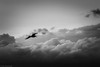 Into the storm (The Frustrated Photog (Anthony) ADPphotography) Tags: bandirma birds category places travel turkey bird birdinflight seagull clouds storm stormclouds stormysky mono monochrome bw blackandwhite whiteandblack canon1585mm canon70d canon wildlife flight flying outdoor travelphotography sky cloud