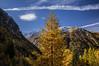 Lillaz_31102017-017 (Stefano Merli) Tags: feuillage foliage laub lillaz cogne aosta aoste valledaosta valléedaoste aostavalley aostatal pngp grandparadis parconazionaledelgranparadiso gran paradiso polarizer polariseur polarizzatore polarisator autunno autumn herbst automne stefanomerli k3 pentax pentaxk3 alpi alpino alpes alpen alpe montagna mountain montagne valdicogne valdecogne cognevalley valley valle val granparadisonationalpark italia italy italie italien