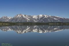 TETONS (Robert Strickland) Tags: bears elk elkrefuge grizzly moose mountains mountais tetons jackson wyoming usa us