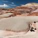 Red Hills of Utah