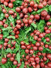 Radish (Ahmed's Eye !) Tags: radish vegetable veggie green salad red garden