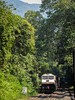 EMD bankers (mohammedali47) Tags: bankers emdloco locomotive hubbali braganzaghats forest bcna