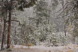 Winter in Fall - Grand Teton Park - 8704b+