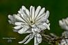 Fleurs ( photopade (Nikonist)) Tags: fleurs végétation verdure nikon nikond200 imac apple affinityphoto sigma70300mmf456apomacrosuperii bokeh