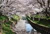 DSC01715 (維尼賈許) Tags: 2017tokyotrip a7m2 day6 japan zeissbatis1885 埼玉県 川越市 kawagoeshi saitamaken 日本 jp