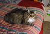 _MG_2558.jpg (orig_lowolf) Tags: canoneos5dmarkii flickr lakeoswego oregon oslo sigma247028ex cat