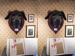 Sherlock Holmes Museum- 221b Baker Street (Teddy Alfrey) Tags: 3d stereo crosseyed