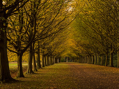 Jubilee Walk, Anglesey Abbey (davepickettphotographer) Tags: angleseyabbey nationaltrust uk east eastern region trust property cambridgeshire cambridge lode swaffham road autumn trees jubilee walk 1977 queens