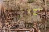 Fisheating at Winter Low Water (BobHartmannPhotography) Tags: hartmann landscape swr nature fisheatingcreek bobhartmanncom bobhartmann bobhartmannphotography wildlife wwwbobhartmanncom hiking p everglades 365 1365 c2017bobhartmann fl usa