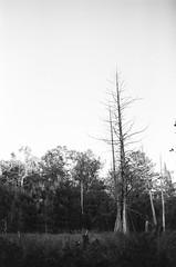 Edit -1-36 (Dane Van) Tags: analog film kodak trix 400tx canon rebelti 35mm 35f2is canadacreekranch atlantamichigan fall